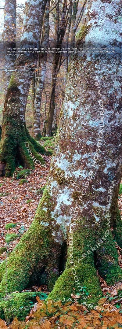 """""""El Laberinto del Corazón Verde"""" by photoAlquimia©"""