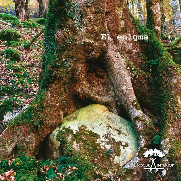 El Bosque Interior- photoAlquimia